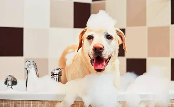 champu para perro de pieles sensibles