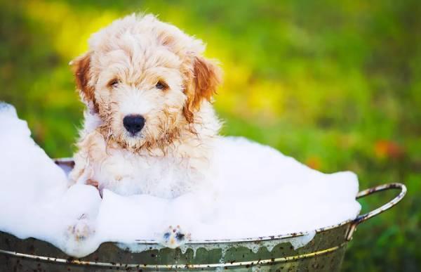 perro en bañera