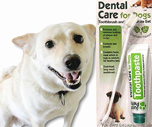 Cepillo de dientes y pasta de dientes para perros